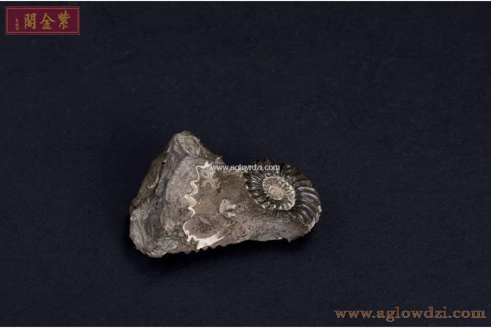 序號:328  螺化石